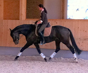 The mare Rascavelle with her new trainer.