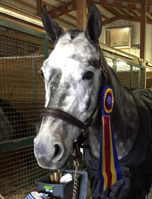 Cooper lives now in Maryland USA. At his first rated horse show he was champion in the baby greens. Congratulations!