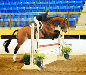 Clooney is already very successful in the US hunter and equitation ring. Congratulations!