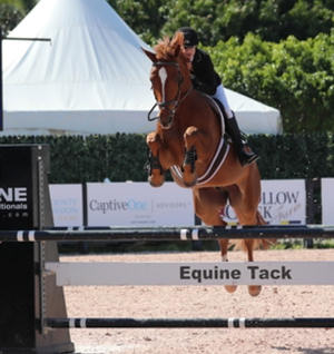 Laurie immediately successful with Gustav in the USA. Congratulations!