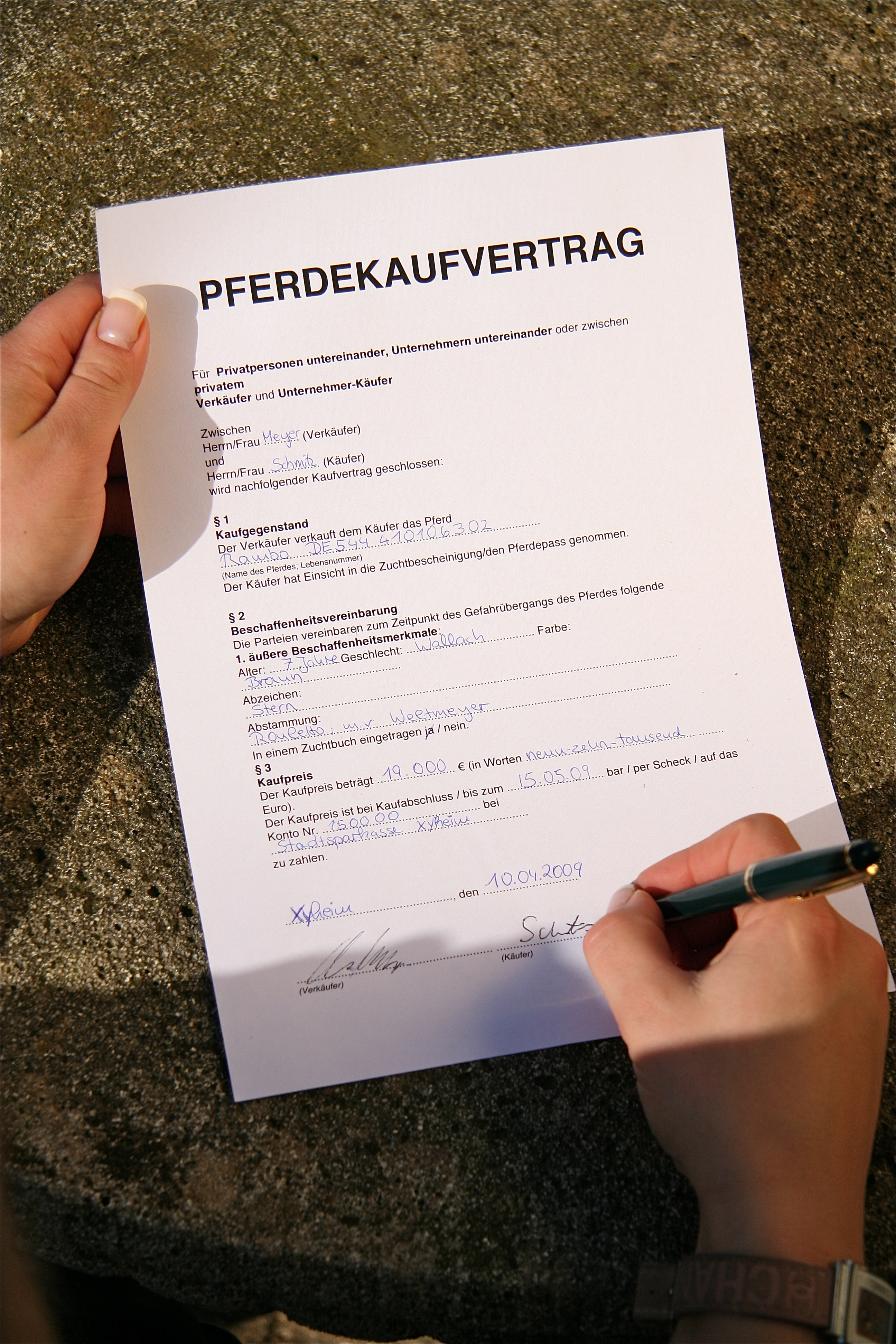 Buying a horse German Horse Center – Horse Sales Contract