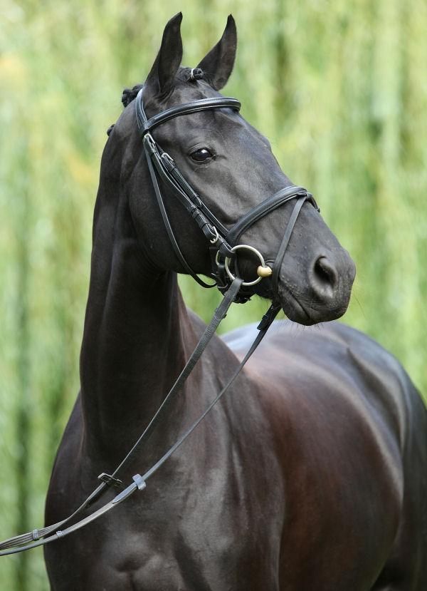 dark horse deutsch